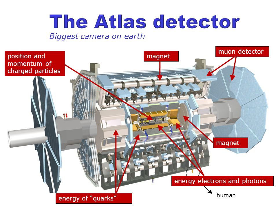 human Biggest camera on earth energy electrons and photons energy of quarks position and momentum of charged particles magnet muon detector magnet