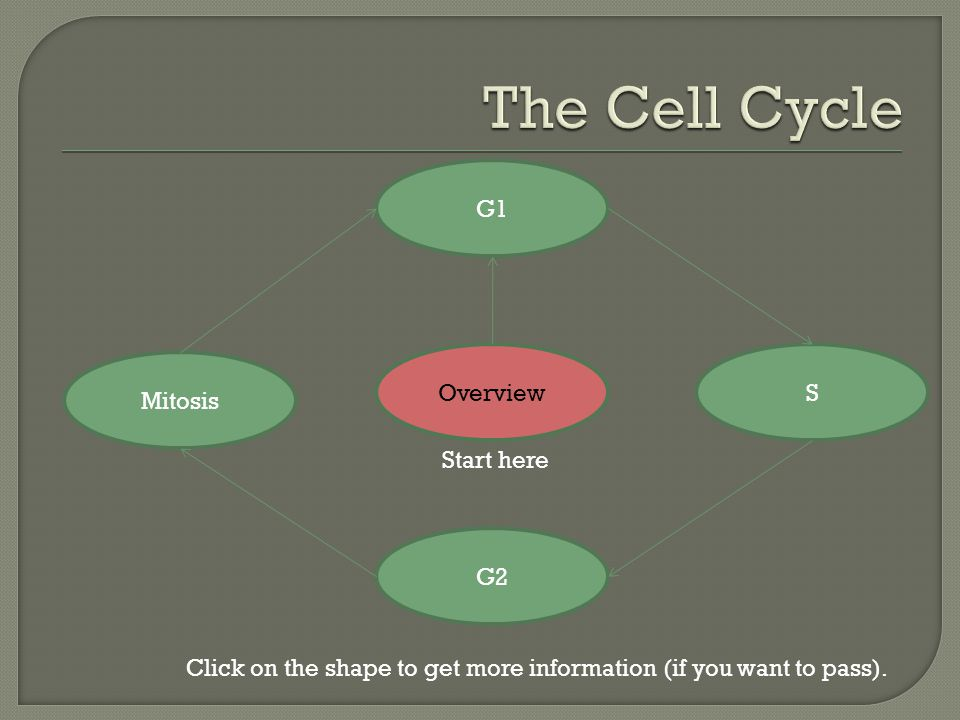 Overview G2 S G1 Mitosis Click on the shape to get more information (if you want to pass).
