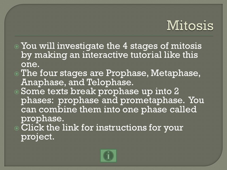  You will investigate the 4 stages of mitosis by making an interactive tutorial like this one.