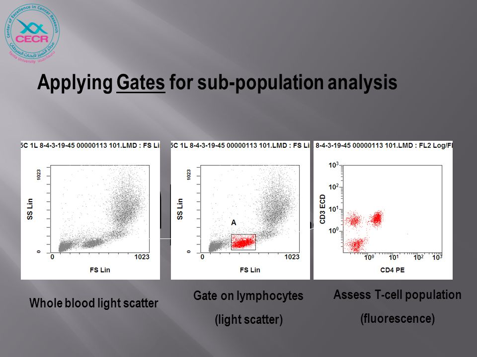 Applying Gates for sub-population analysis Simple gating stratagies … Whole blood light scatter Gate on lymphocytes (light scatter) Assess T-cell popu