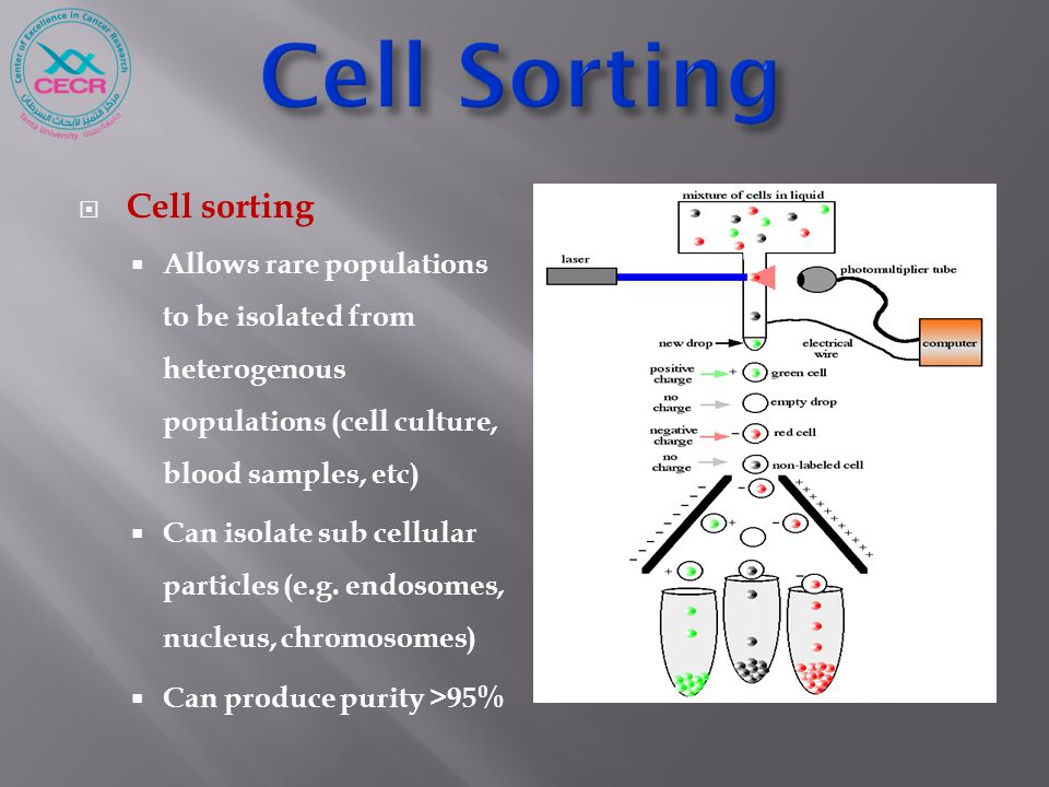  Cell sorting  Allows rare populations to be isolated from heterogenous populations (cell culture, blood samples, etc)  Can isolate sub cellular pa