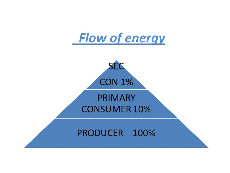 Flow of energy SEC CON 1% PRIMARY CONSUMER 10% PRODUCER 100%
