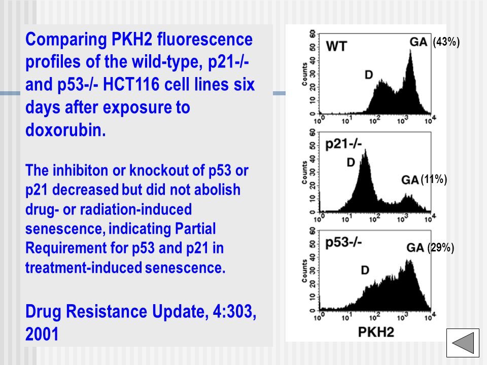 Comparing PKH2 fluorescence profiles of the wild-type, p21-/- and p53-/- HCT116 cell lines six days after exposure to doxorubin.