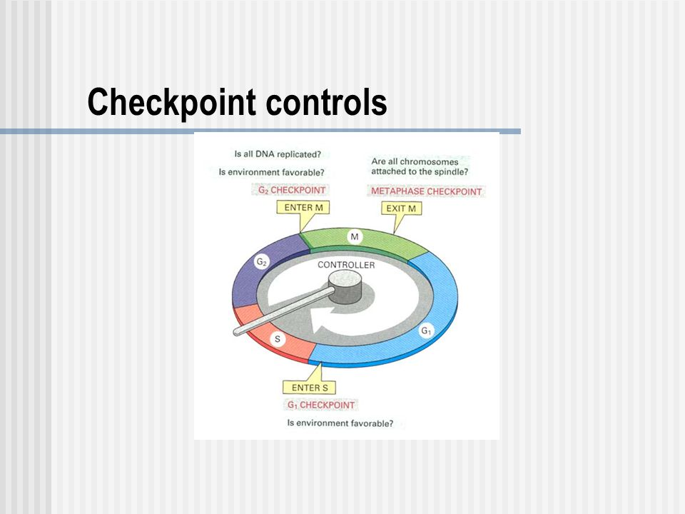 Checkpoint controls
