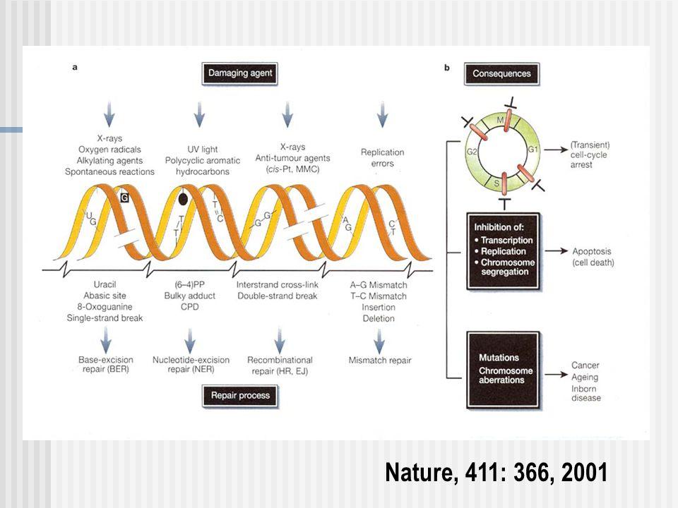 Nature, 411: 366, 2001