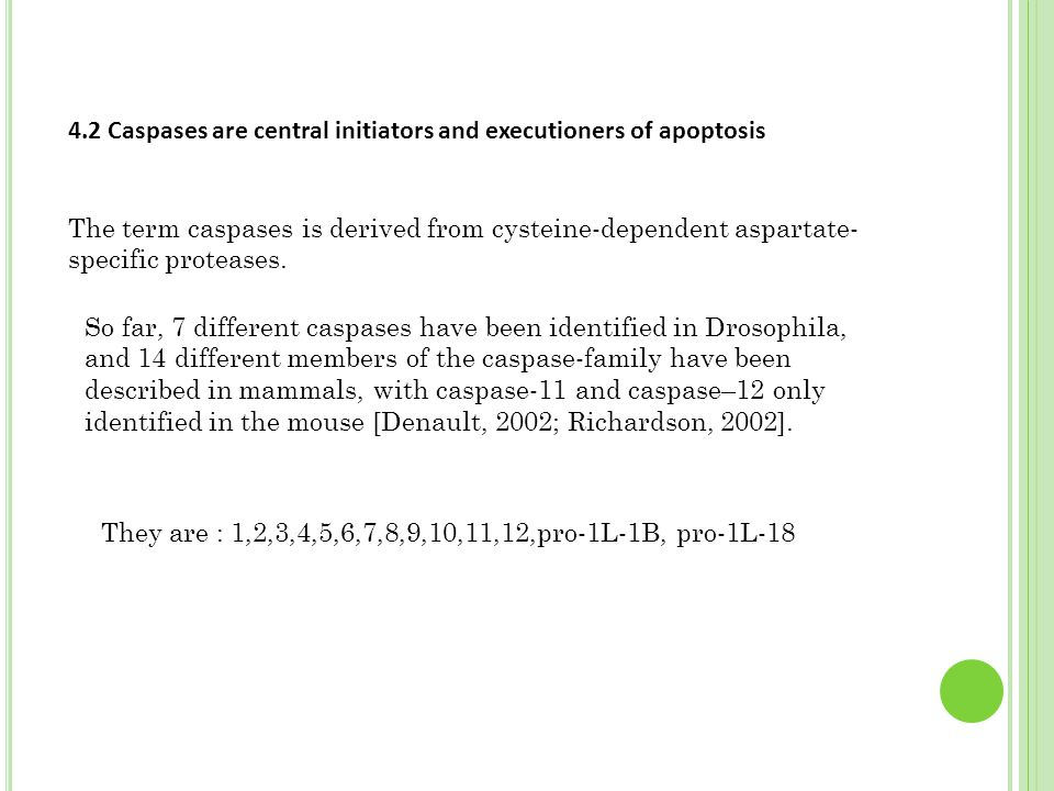 4.2 Caspases are central initiators and executioners of apoptosis The term caspases is derived from cysteine-dependent aspartate- specific proteases.