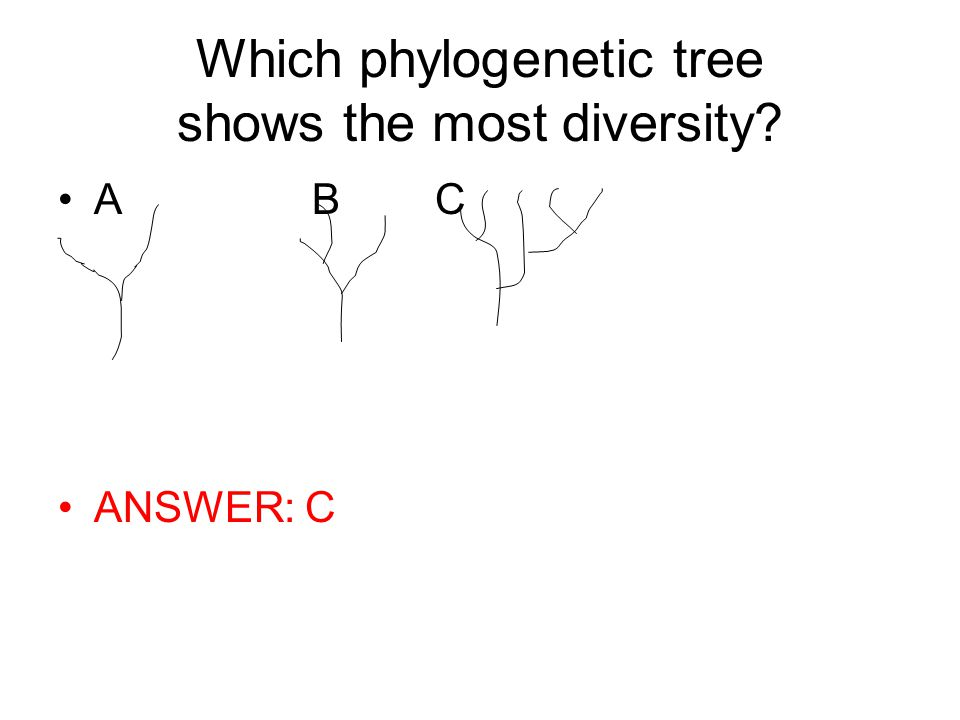 Which phylogenetic tree shows the most diversity? A B C ANSWER: C