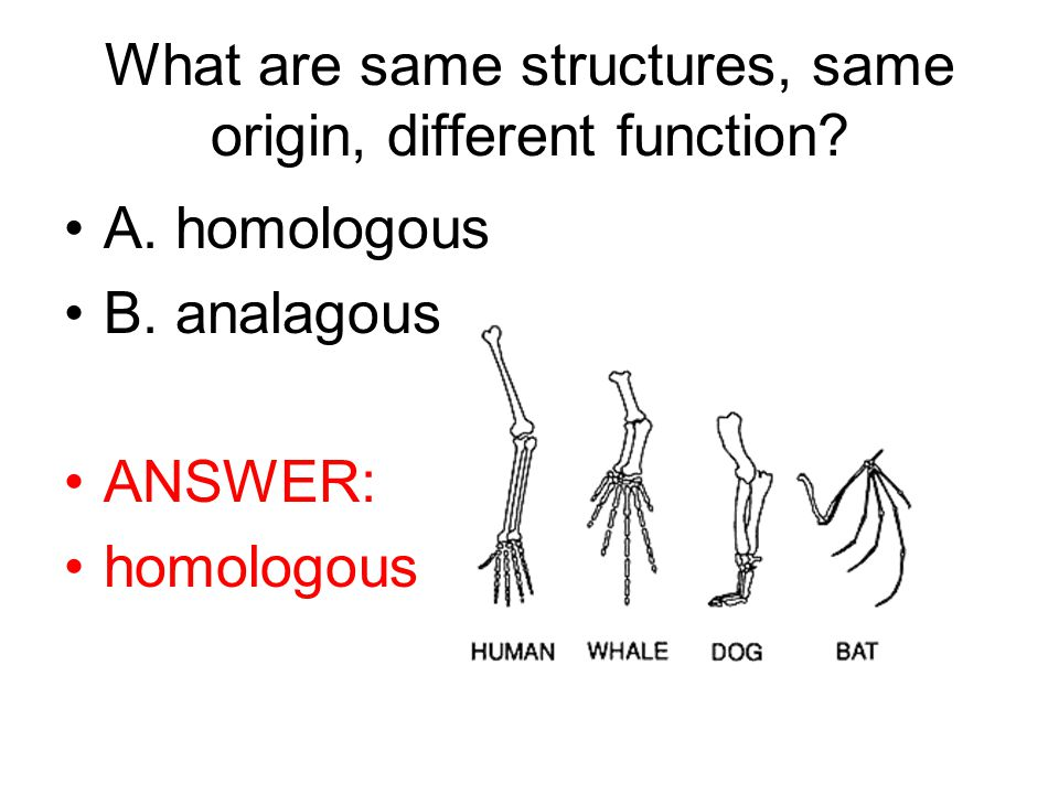 What are same structures, same origin, different function.