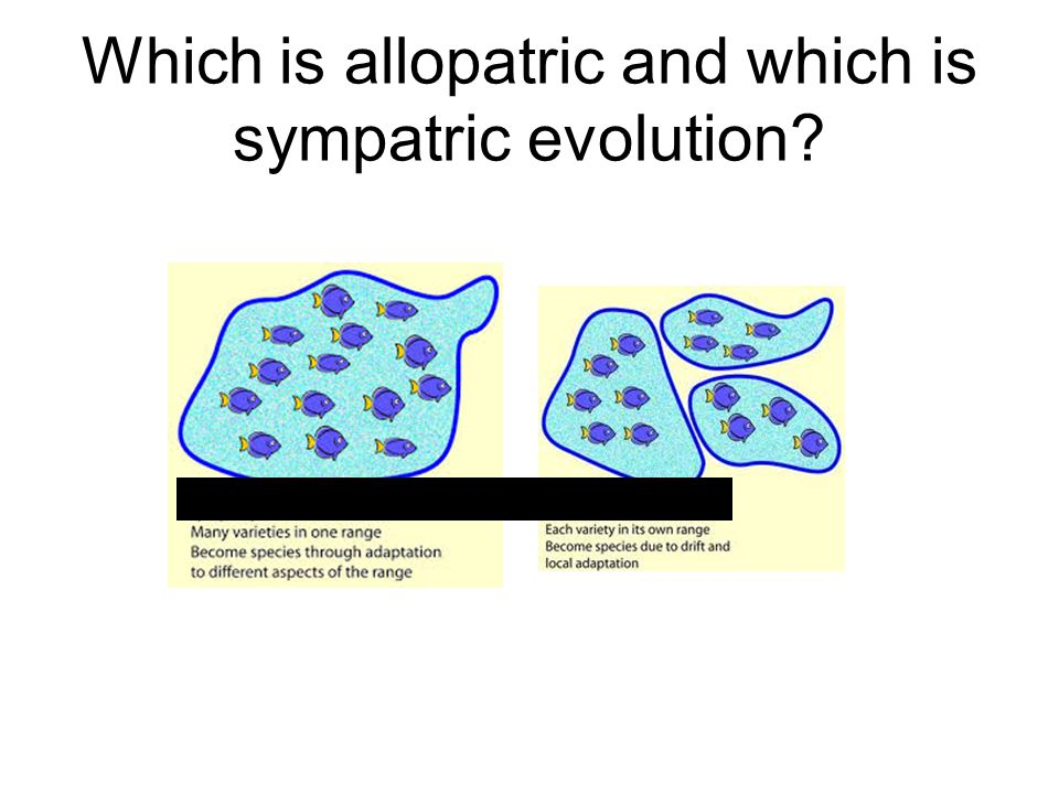 Which is allopatric and which is sympatric evolution?