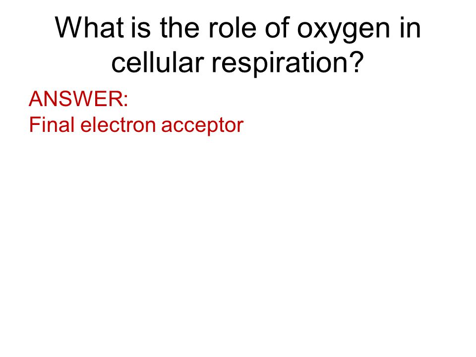 What is the role of oxygen in cellular respiration ANSWER: Final electron acceptor