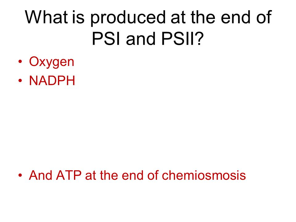 What is produced at the end of PSI and PSII? Oxygen NADPH And ATP at the end of chemiosmosis