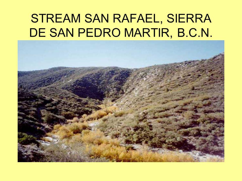 STREAM SAN RAFAEL, SIERRA DE SAN PEDRO MARTIR, B.C.N.
