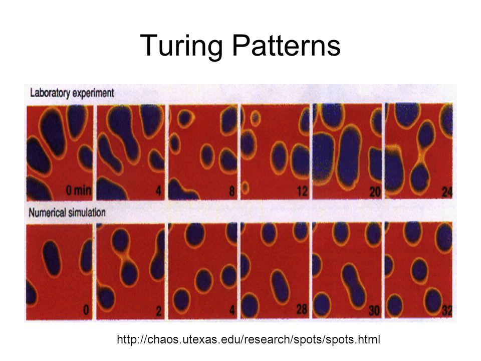 Turing Patterns http://chaos.utexas.edu/research/spots/spots.html