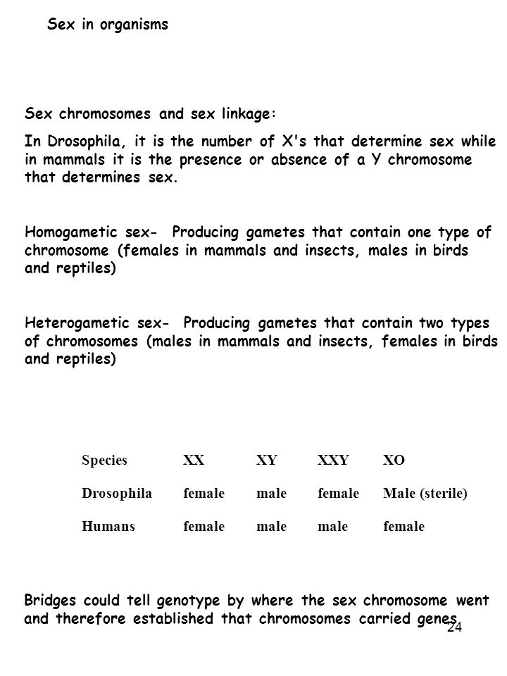 24 Sex in organisms Sex chromosomes and sex linkage: In Drosophila, it is the number of X's that determine sex while in mammals it is the presence or
