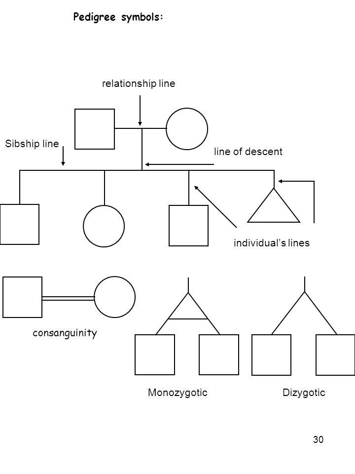 30 Pedigree symbols: line of descent individual's lines relationship line Sibship line consanguinity MonozygoticDizygotic