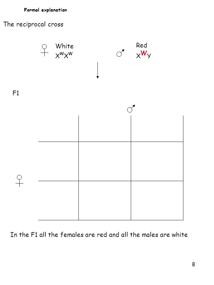 8 Formal explanation White X w Red X W Y F1 The reciprocal cross In the F1 all the females are red and all the males are white