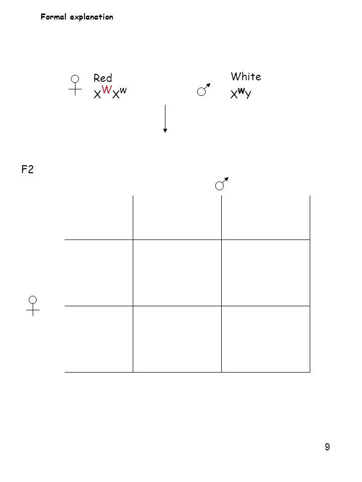 9 Formal explanation Red X W X w White X w Y F2