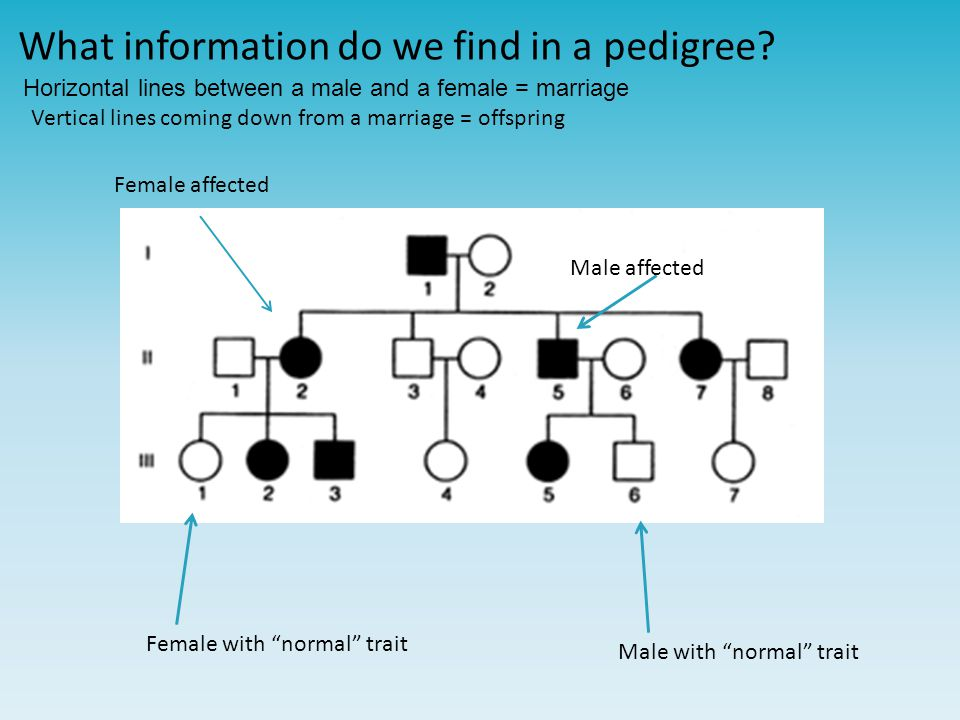"""What information do we find in a pedigree? Male with """"normal"""" traitFemale with """"normal"""" trait Female affected Male affected Horizontal lines between a"""