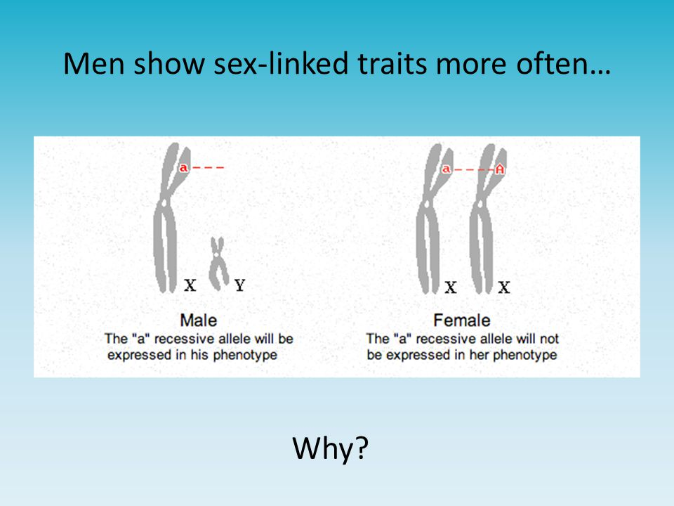 Men show sex-linked traits more often… Why?