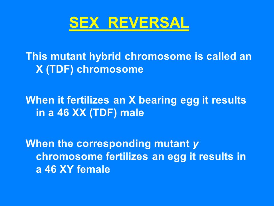 This mutant hybrid chromosome is called an X (TDF) chromosome When it fertilizes an X bearing egg it results in a 46 XX (TDF) male When the correspond
