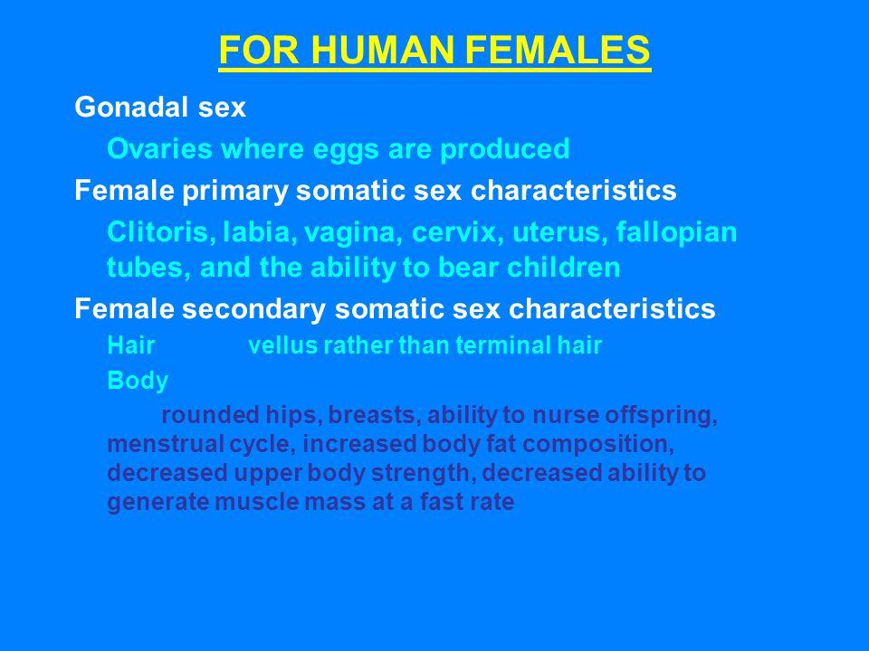 FOR HUMAN FEMALES Gonadal sex Ovaries where eggs are produced Female primary somatic sex characteristics Clitoris, labia, vagina, cervix, uterus, fall