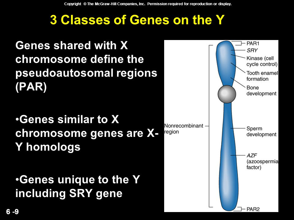 6 -9 Copyright © The McGraw-Hill Companies, Inc. Permission required for reproduction or display. 3 Classes of Genes on the Y Genes shared with X chro