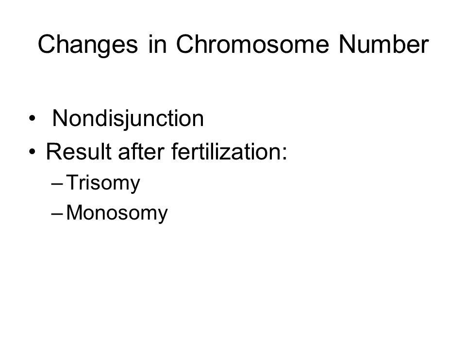 Changes in Chromosome Number Nondisjunction Result after fertilization: –Trisomy –Monosomy
