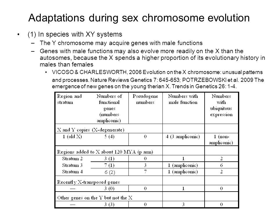 Adaptations during sex chromosome evolution (1) In species with XY systems –The Y chromosome may acquire genes with male functions –Genes with male functions may also evolve more readily on the X than the autosomes, because the X spends a higher proportion of its evolutionary history in males than females VICOSO & CHARLESWORTH, 2006 Evolution on the X chromosome: unusual patterns and processes.