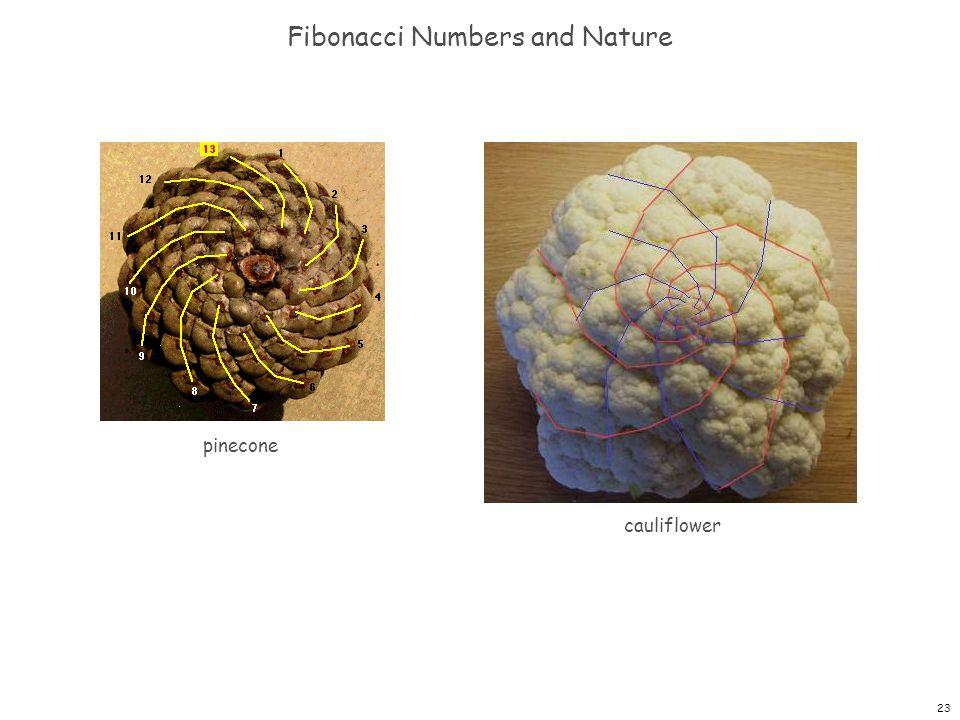 23 Fibonacci Numbers and Nature pinecone cauliflower