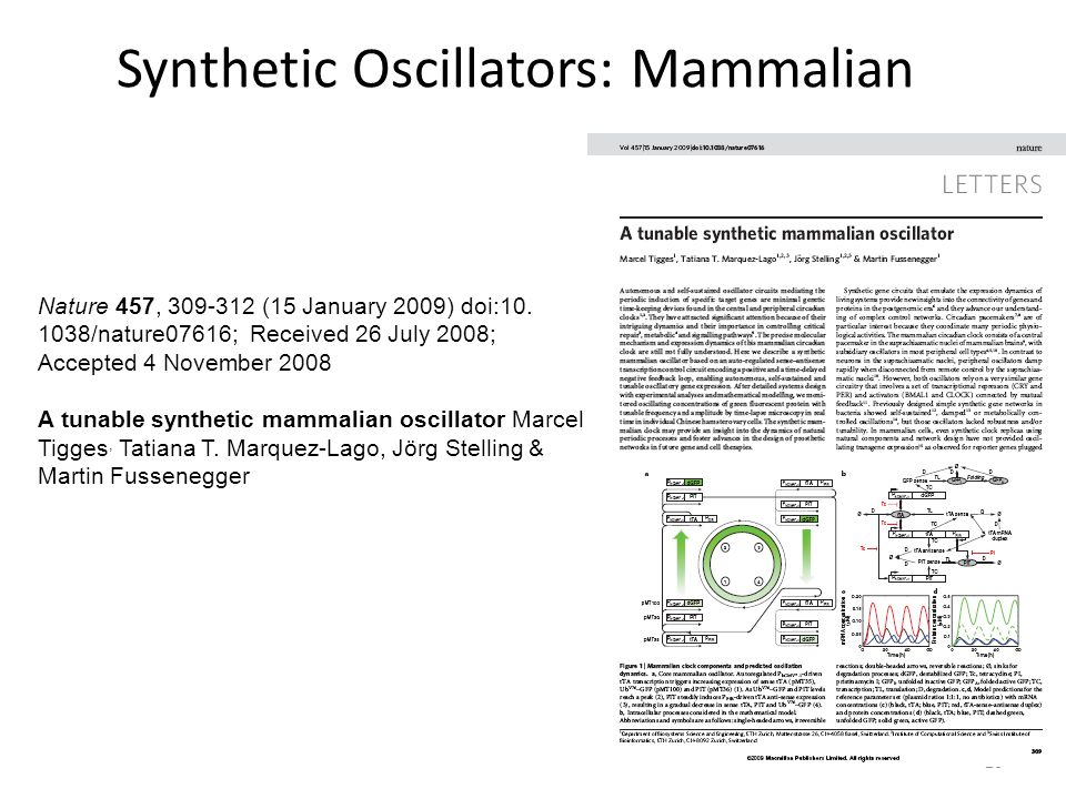 Synthetic Oscillators: Mammalian 26 Nature 457, 309-312 (15 January 2009) doi:10.