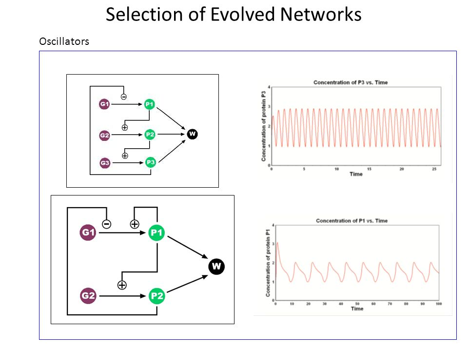 Selection of Evolved Networks Oscillators