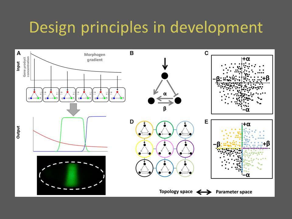 Design principles in development