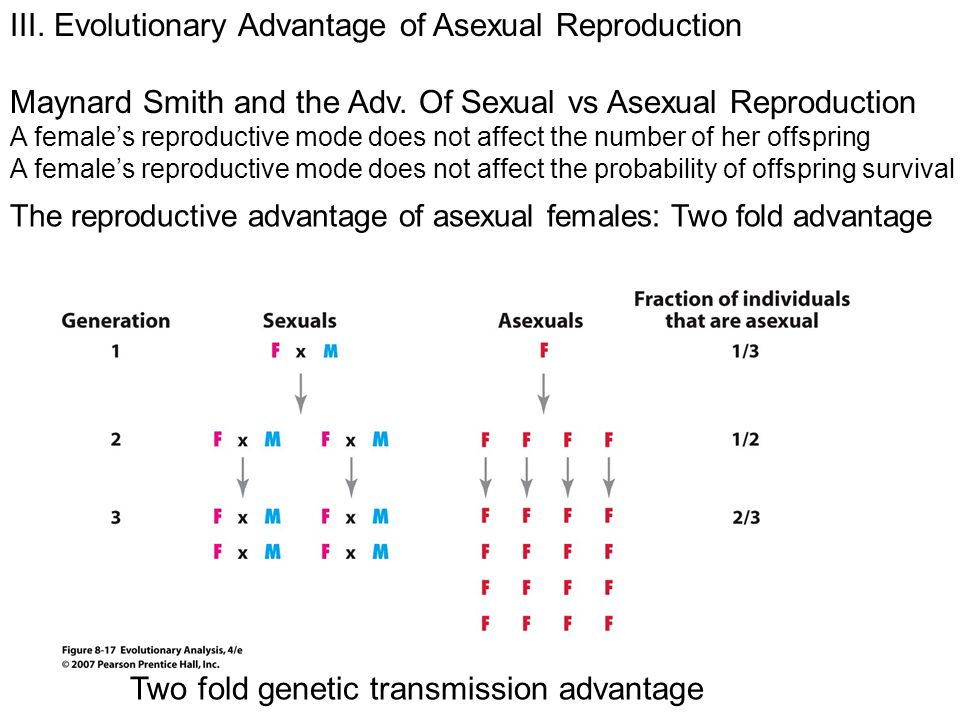 The reproductive advantage of asexual females: Two fold advantage III.