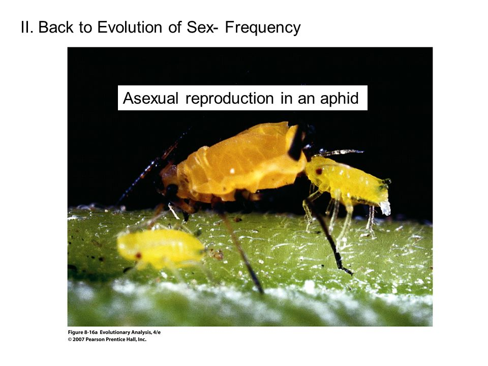 II. Back to Evolution of Sex- Frequency Asexual reproduction in an aphid
