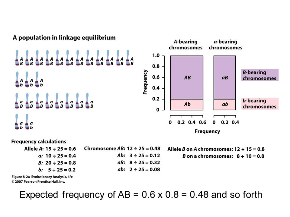 Selection Snails and trematode parasites Red Queen Hypothesis (Leigh van Valen) Segregation & Recombination recreate rare, favored genotypes White = frequency of males New Zealand Mud Snail 2 types of females: Sexual Asexual