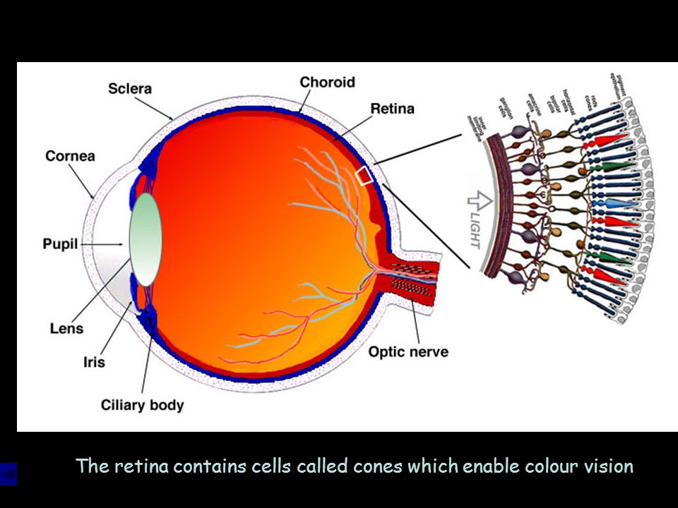 The lens refracts the light to focus on the retina