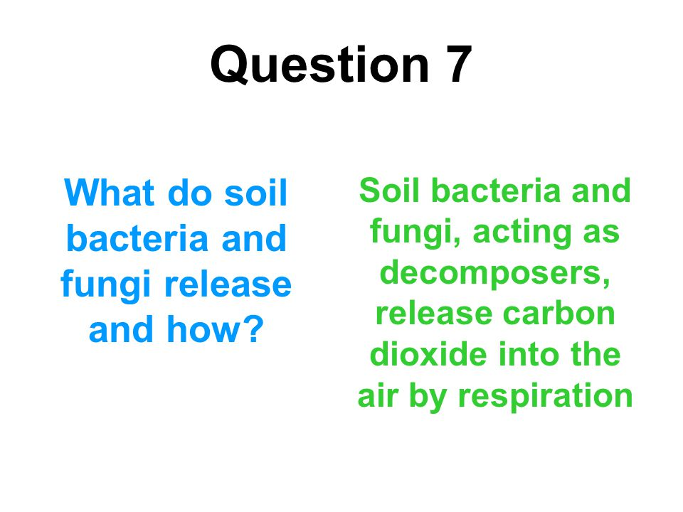 Question 7 What do soil bacteria and fungi release and how? Soil bacteria and fungi, acting as decomposers, release carbon dioxide into the air by res
