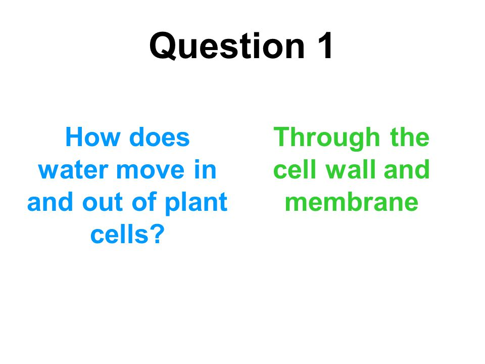 Question 1 How does water move in and out of plant cells? Through the cell wall and membrane