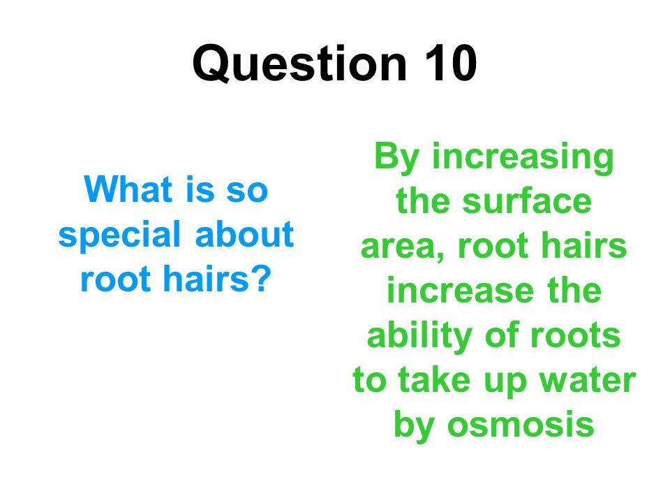 Question 10 What is so special about root hairs? By increasing the surface area, root hairs increase the ability of roots to take up water by osmosis