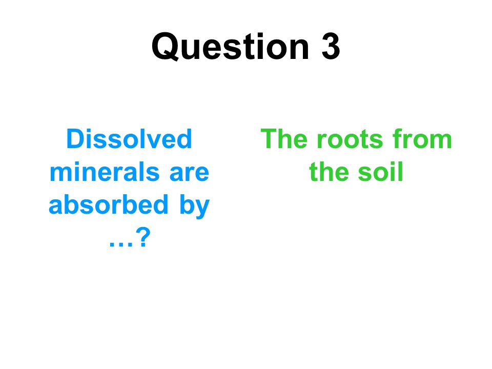 Question 3 Dissolved minerals are absorbed by …? The roots from the soil