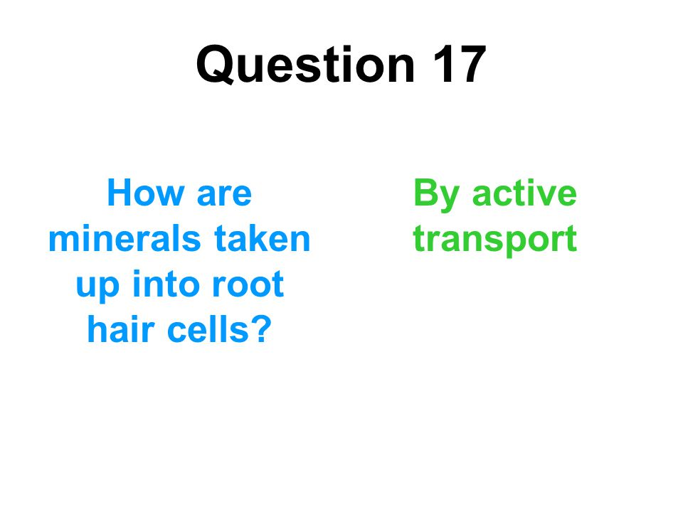 Question 17 How are minerals taken up into root hair cells? By active transport