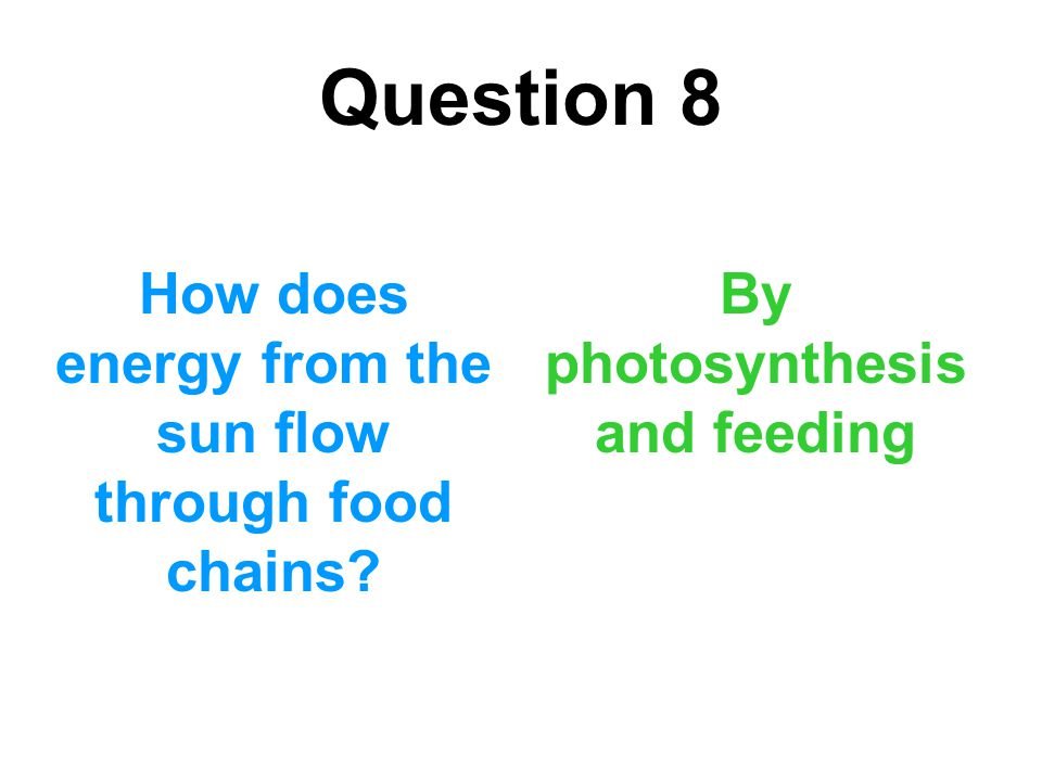 Question 8 How does energy from the sun flow through food chains? By photosynthesis and feeding