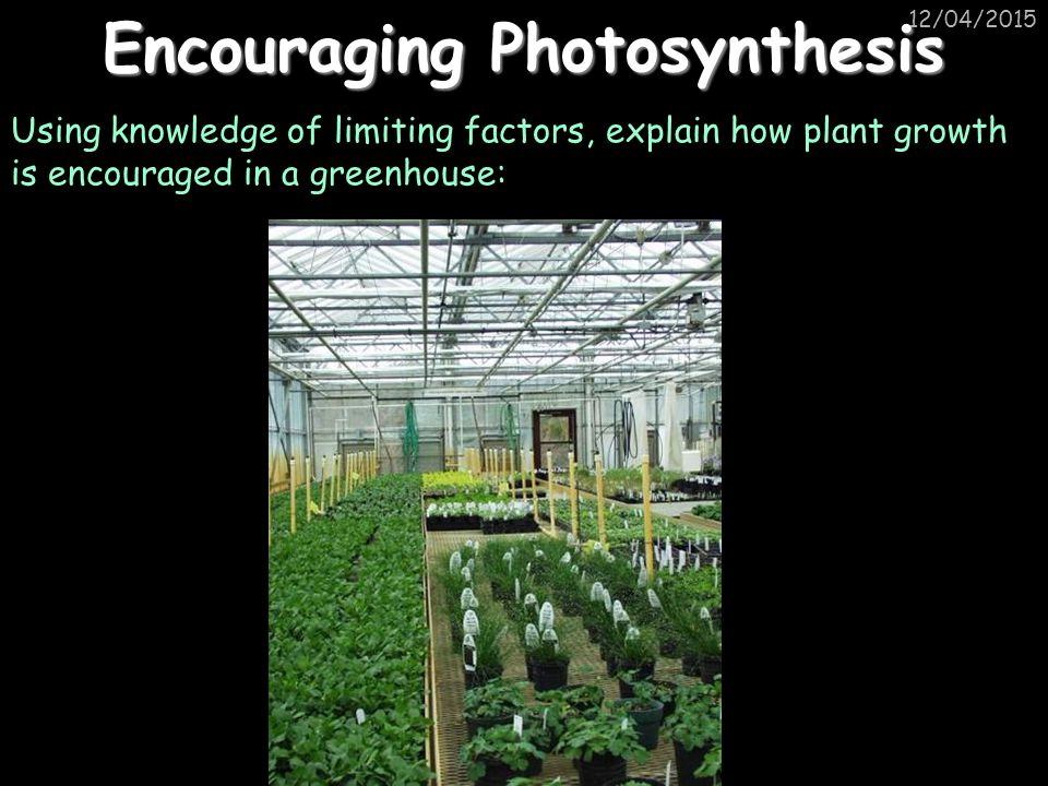 12/04/2015 Encouraging Photosynthesis Using knowledge of limiting factors, explain how plant growth is encouraged in a greenhouse: