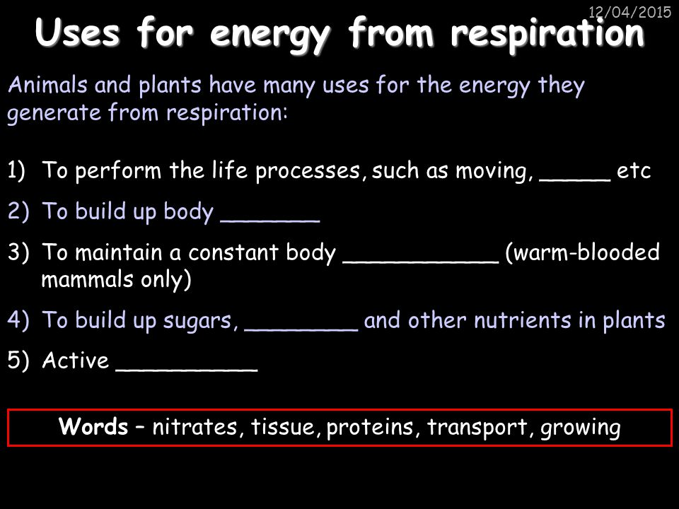 12/04/2015 Uses for energy from respiration Animals and plants have many uses for the energy they generate from respiration: 1)To perform the life processes, such as moving, _____ etc 2)To build up body _______ 3)To maintain a constant body ___________ (warm-blooded mammals only) 4)To build up sugars, ________ and other nutrients in plants 5)Active __________ Words – nitrates, tissue, proteins, transport, growing