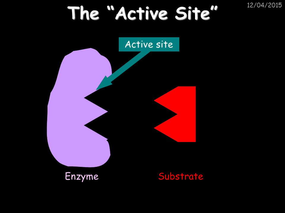 12/04/2015 The Active Site EnzymeSubstrate Active site