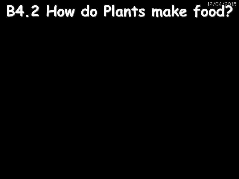 12/04/2015 B4.2 How do Plants make food?