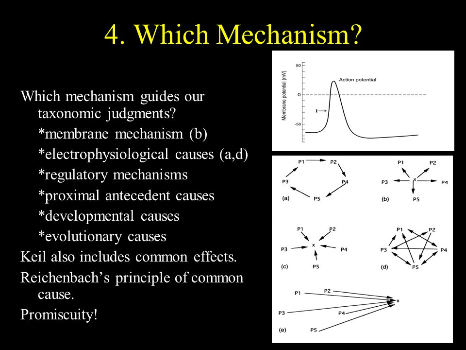 4. Which Mechanism? Which mechanism guides our taxonomic judgments? *membrane mechanism (b) *electrophysiological causes (a,d) *regulatory mechanisms