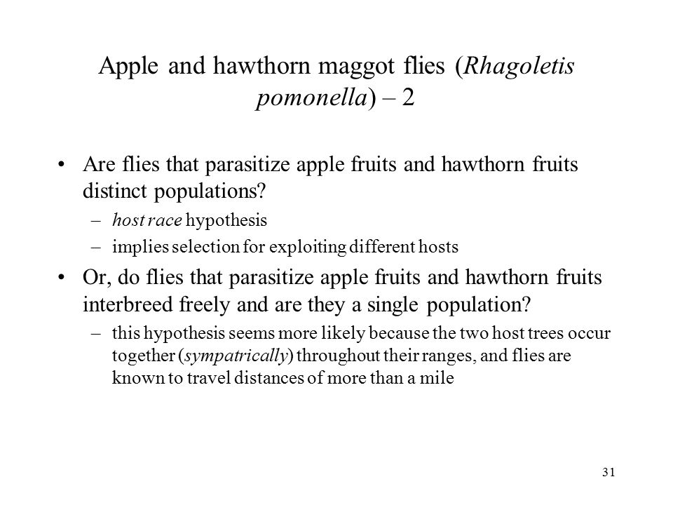 31 Apple and hawthorn maggot flies (Rhagoletis pomonella) – 2 Are flies that parasitize apple fruits and hawthorn fruits distinct populations? –host r