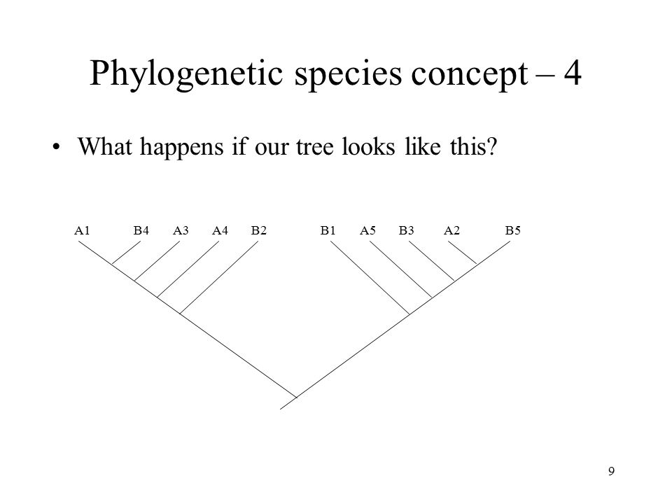 9 Phylogenetic species concept – 4 What happens if our tree looks like this? A1B4A3A4B2B1A5B3A2B5