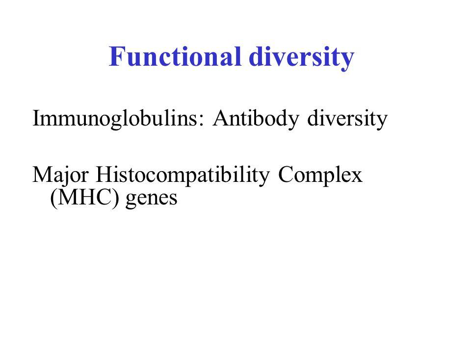 Functional diversity Immunoglobulins: Antibody diversity Major Histocompatibility Complex (MHC) genes